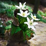 White_Flowers-wallpaper-150